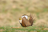 BRD 19 RF0001 01