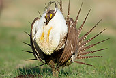 BRD 19 RF0006 01
