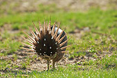 BRD 19 RF0007 01