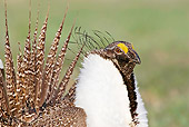 BRD 19 RF0008 01