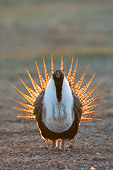 BRD 19 NE0002 01