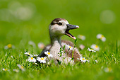 BRD 20 AC0022 01