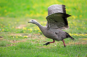 BRD 20 AC0023 01