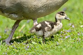 BRD 20 AC0025 01