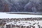 BRD 20 DA0005 01