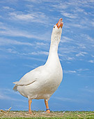 BRD 20 JE0001 01