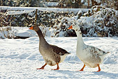 BRD 20 KH0002 01