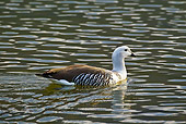 BRD 20 KH0007 01