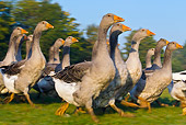 BRD 20 KH0012 01