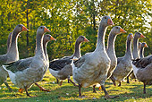BRD 20 KH0013 01