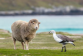 BRD 20 KH0016 01