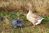 BRD 20 LS0004 01