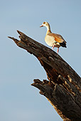 BRD 20 MC0001 01
