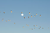 BRD 20 SK0005 01