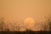 BRD 20 SK0006 01
