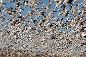 BRD 20 SK0013 01