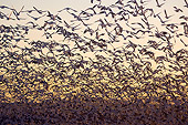 BRD 20 SK0018 01