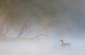 BRD 20 WF0008 01