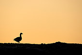BRD 20 WF0009 01