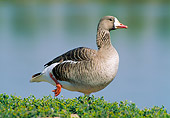 BRD 20 WF0010 01