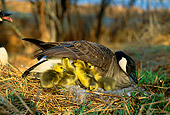 BRD 20 DB0001 01