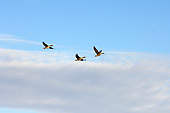 BRD 20 SK0004 01