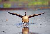 BRD 20 TK0001 01