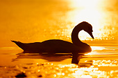 BRD 21 AC0013 01