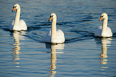BRD 21 AC0014 01