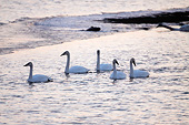 BRD 21 DA0001 01