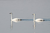 BRD 21 DA0002 01