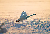 BRD 21 GL0002 01