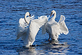 BRD 21 LS0002 01