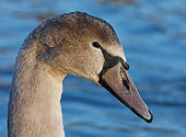 BRD 21 WF0001 01