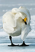 BRD 21 KH0001 01