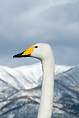 BRD 21 KH0002 01
