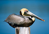 BRD 22 GR0001 01