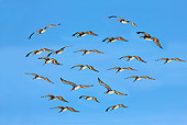 BRD 22 JE0001 01