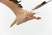 BRD 22 JE0005 01