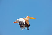 BRD 22 JE0006 01
