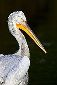 BRD 22 KH0002 01