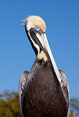 BRD 22 LS0004 01