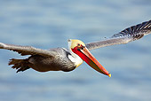 BRD 22 LS0007 01