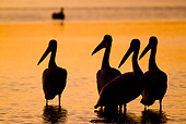 BRD 22 LS0013 01