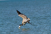 BRD 22 LS0016 01
