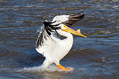 BRD 22 LS0020 01