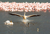 BRD 22 MC0012 01