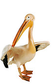 BRD 22 MH0001 01