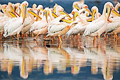 BRD 22 MH0006 01