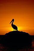 BRD 22 MH0013 01